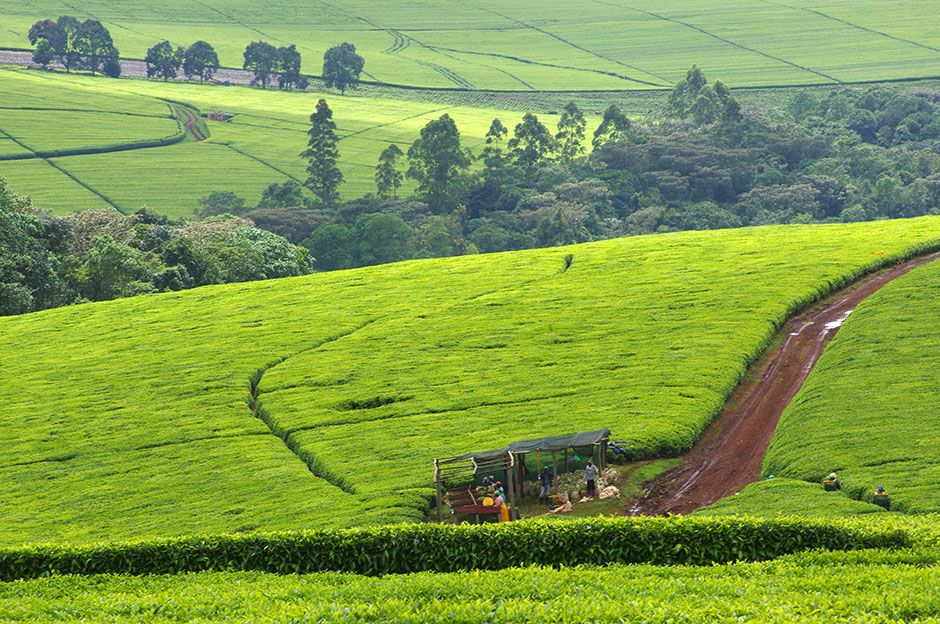 Agriculture and Food Authority (AFA) Engages Admedia Communications Ltd in the Provision of Online Content Development and Global KenyanTea Digital Campaign Services for AFA – Tea Directorate